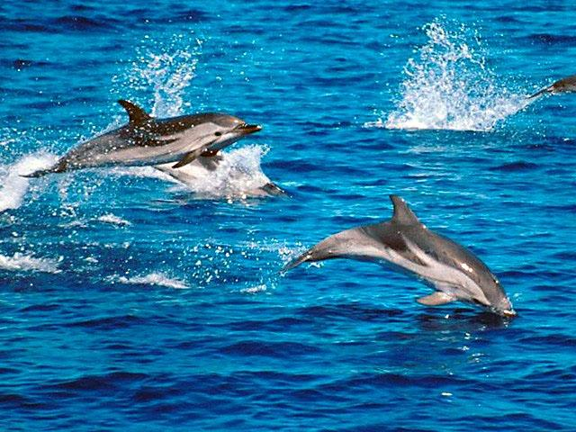 images of dolphins